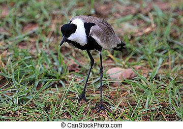 Bird - Wildlife Sanctuary - Uganda - Bird - Wildlife...