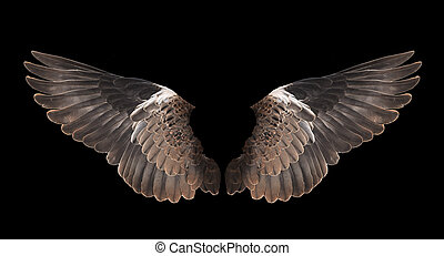 bird wing isolated on black background