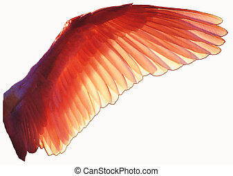 Bird wing - translucent orange bird wing