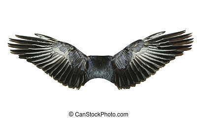 bird wings isolated on a white