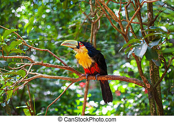 Bird with huge beak - Large bird with bright plumage and a...
