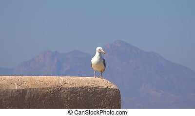 Bird With Mountain Vista