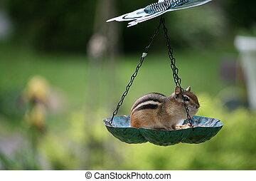 birdfeeder - isolated  bird feeder