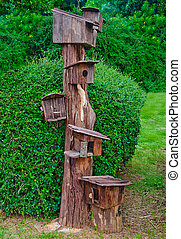 birdhouse bois, famille