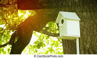 Birdhouse fitted on the trunk of a large oak