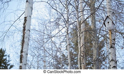 Birdhouse hanging on a tree in winter forest of deciduous and coniferous woods.