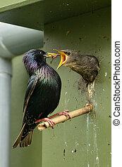 birdhouse, have, hjem