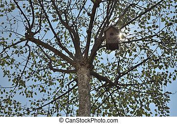 Birdhouse in Tree Top