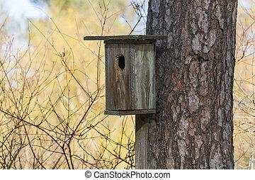 birdhouse nailed to the pine