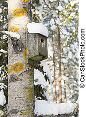 Birdhouse on Aspen Tree with snow on it.