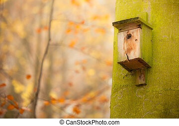 birdhouse on the tree in forest
