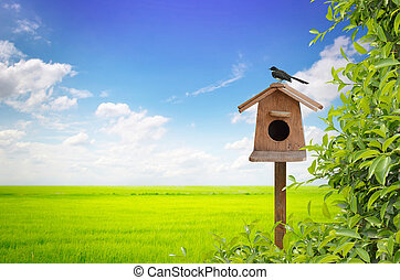 birdhouse, pradera, plano de fondo, pájaro