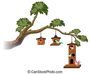 birdhouses, oiseaux, branche