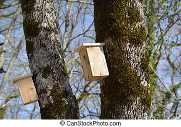 Birdhouses on the trunks