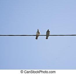 birds, на, провод