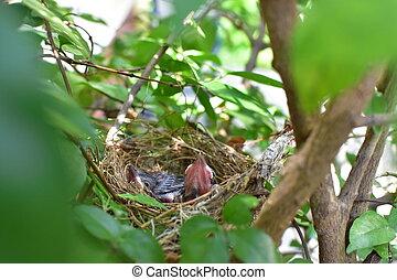 birds, ожидание, для, , мама, к, корм