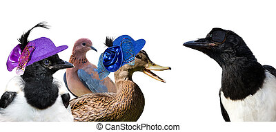 birds., 恋をもて遊ぶ, 3, かささぎ, 見る, heardbreaking, 女性, 涼しい