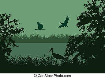 birds., 鸛, 天空, 飛行, 插圖, 早晨, 水, 現實, 湖, 矢量, 沼澤地, 表面, 在下面, 格林河, 或者, 風景