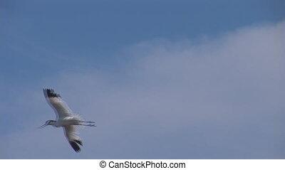 birds 2 - Birds fly over the water