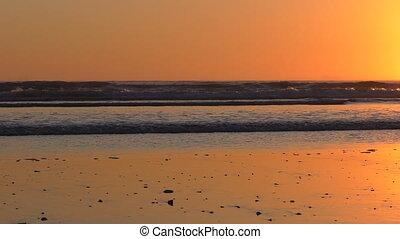 Birds above beach at sunset