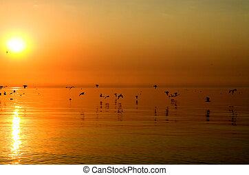 Birds above orange sea - Brood of birds are migrating to...