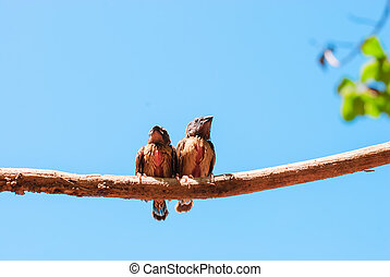 birds and blue sky