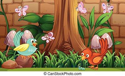 Birds and butterflies in the garden