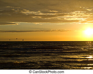 Birds and sunset over the sea
