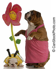 birds and the bees - english bulldog mother and puppy