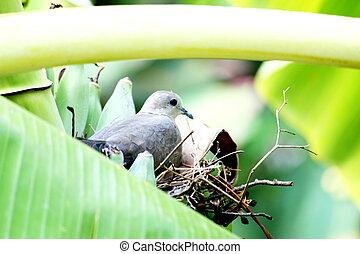 Birds are hatching