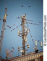 Birds around telecommunication tower - Flock of birds around...
