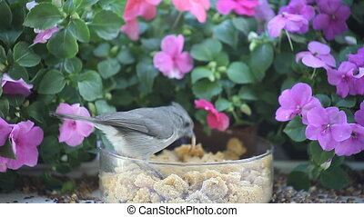 birds at a feeder with flowers