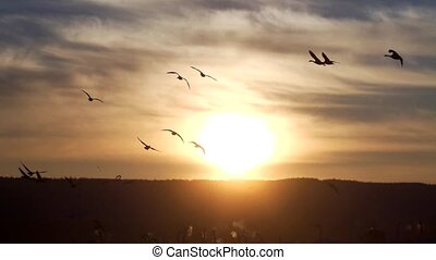 birds at hornborgasj? sweden