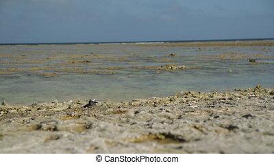 Birds At Lady Elliot Island Beach - Close-up still shot of...