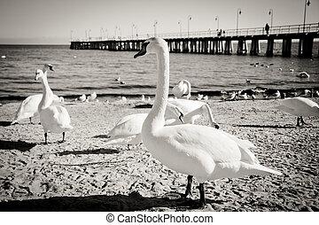 birds at pier