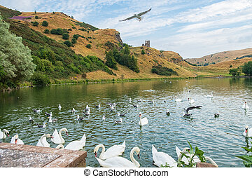 Birds at St Margaret?s Loch and ruins of St Anthony?s chapel in the background, Edinburgh, Scotland.
