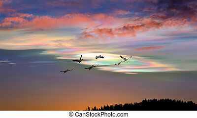 Birds at sunrise or sunset