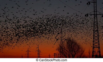 birds at sunset - A lot of birds with the energy industry at...