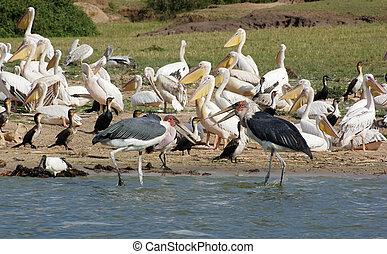 birds at the Queen Elizabeth National Park in Uganda