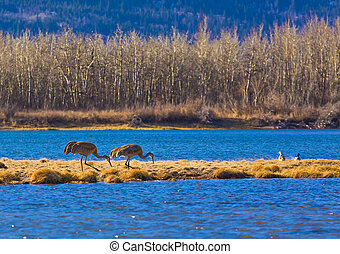 Birds at Waterton Lakes National Park