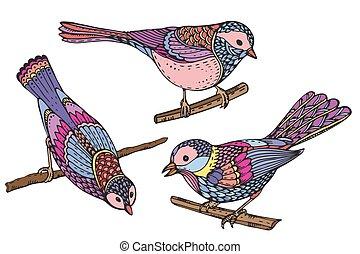 birds., beau, ensemble, coloré, dessiné, main, vecteur, orné, illust