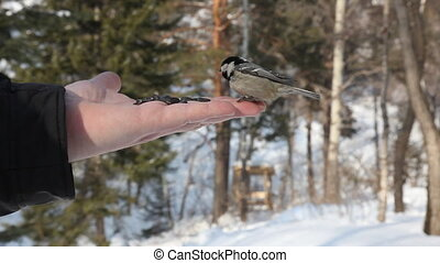 Birds. - Birds eating seeds from hand.