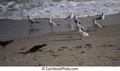 Birds by the sea. Black Sea. - The coast of the southern...