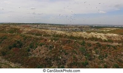 Birds circling above the dump - Birds fly over the pit of...