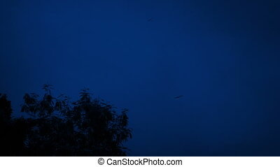 Birds Circling Above Trees At Night - Large birds circle in...