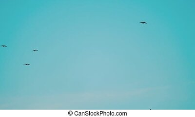 birds circling in the sky a flock of crows. birds flock a lot in the sky circling. birds a lot of crows flock concept on a blue sky background lifestyle