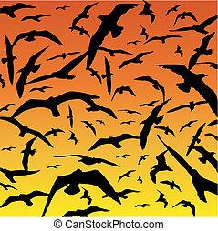 Birds - A Flock of Birds in Flight