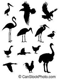 Birds - Vector illustration of various birds silhouettes