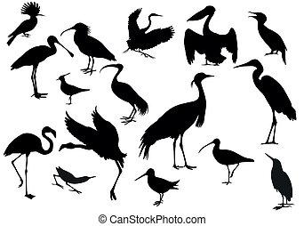birds  - Black birds isolated
