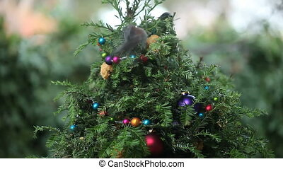 birds compete on Christmas tree - three birds compete for...